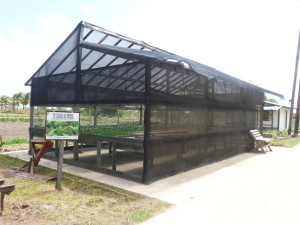 The Hydroponics Facility of Crop Farm 2